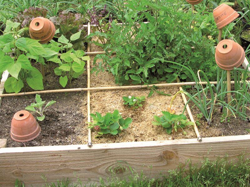 Cultivez vos plantes aromatiques